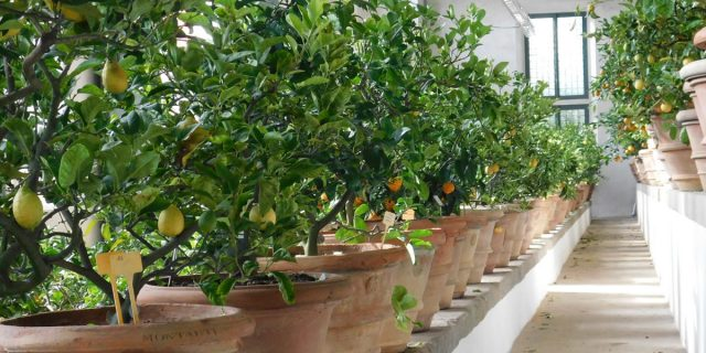 Conservation of historic gardens and citrus collections: Conclusions of the gardening seminar 'Citri et Aurea'